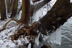 Eiszapfen am Behler See
