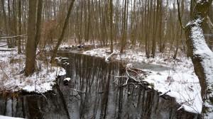 Winterlandschaft im Gehölz