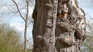 Wandermarkierung an knorrigem Baum nahe Kieswerk