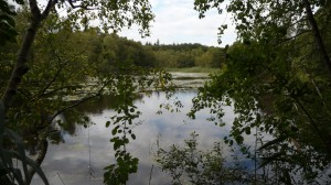 Wesloer Moor im Lauerholz