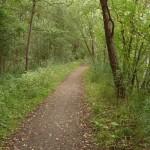 Wanderfeeling Lauerholz