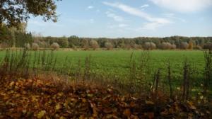 LSG Wakenitz Falkenhusen