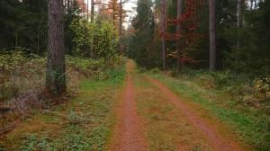 Langer Waldweg von Ratzeburg bis Mölln