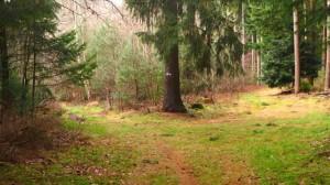 schöne Waldwege bei Roseburg