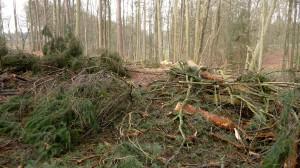 Abgeholzt und nicht aufgeräumt