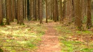Ab hier durch den Wald
