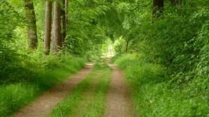 Ein langer Weg durch die grüne Hölle
