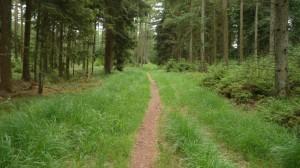 Schmaler Wiesenweg im Wald