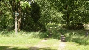 Lieblicher Weg Richtung Seeve