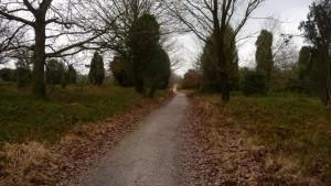 Weg durch die Heide zum Wilseder Berg