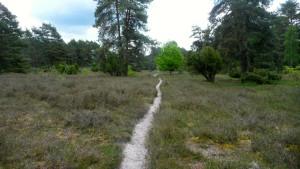 Wanderpfad durch die Misselhorner Heide: Toll!