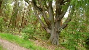 Schöne Bäume am Weg