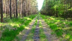 """Weg passt genau für drei Wanderer (""""And three may walk abreast..."""")"""