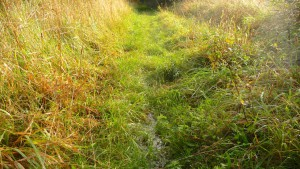 Nasser Wiesenweg am Otternhagener Moor