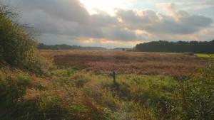 Lichtspiele am Otternhagener Moor