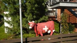 Nanu, ne Kuh! Die Schweiz scheint nicht mehr weit.
