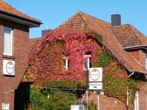 Wein am Haus in Steinhude