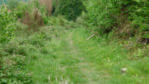 Noch ein schöner Grasweg...