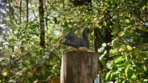 Eichhörnchenskulptur