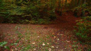 Pilze und Stufen im Wald